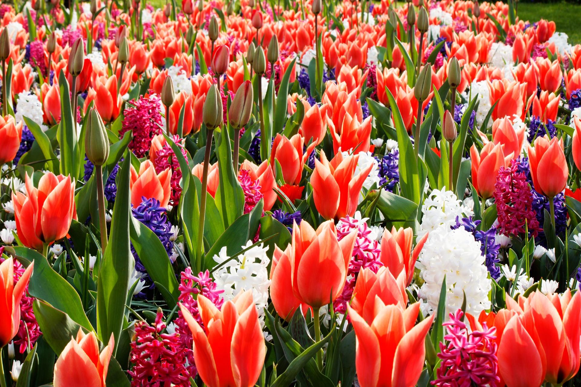 метро весна тюльпаны фото фокс лучшие