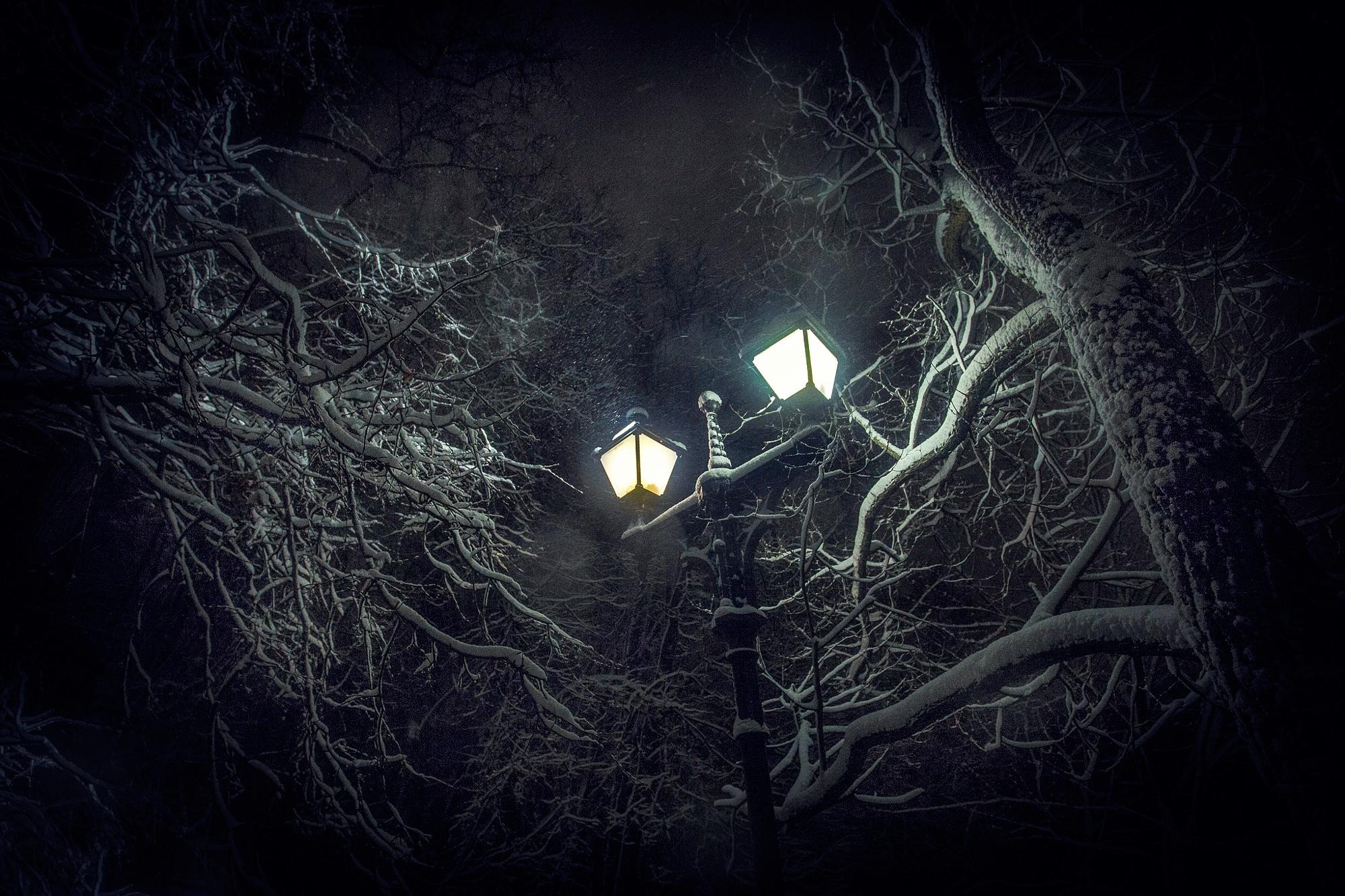 дерево фонарь картинки работу
