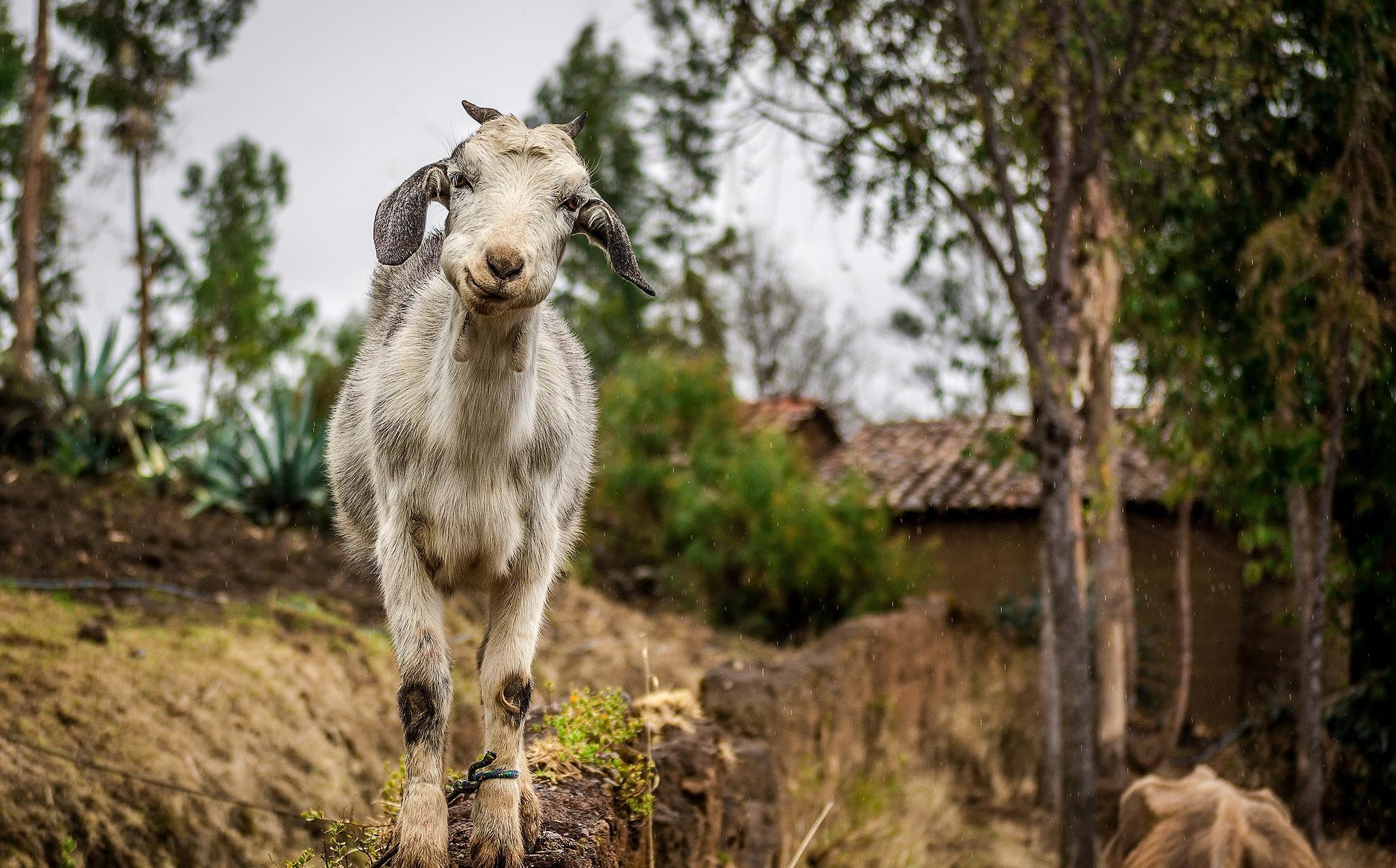Картинки рабочий с козы