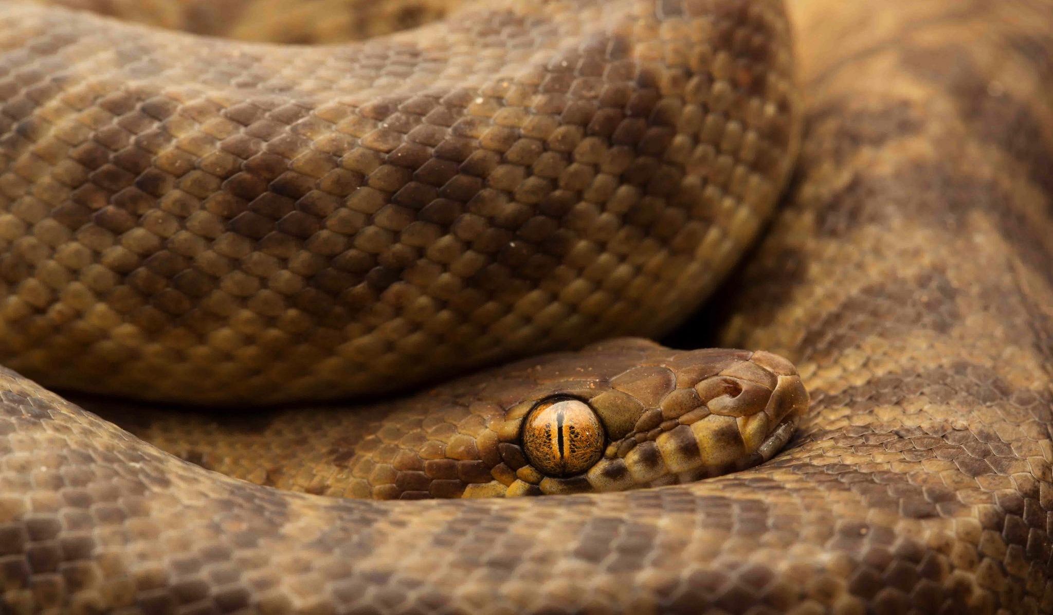 картинки на обои гремучей змеи так