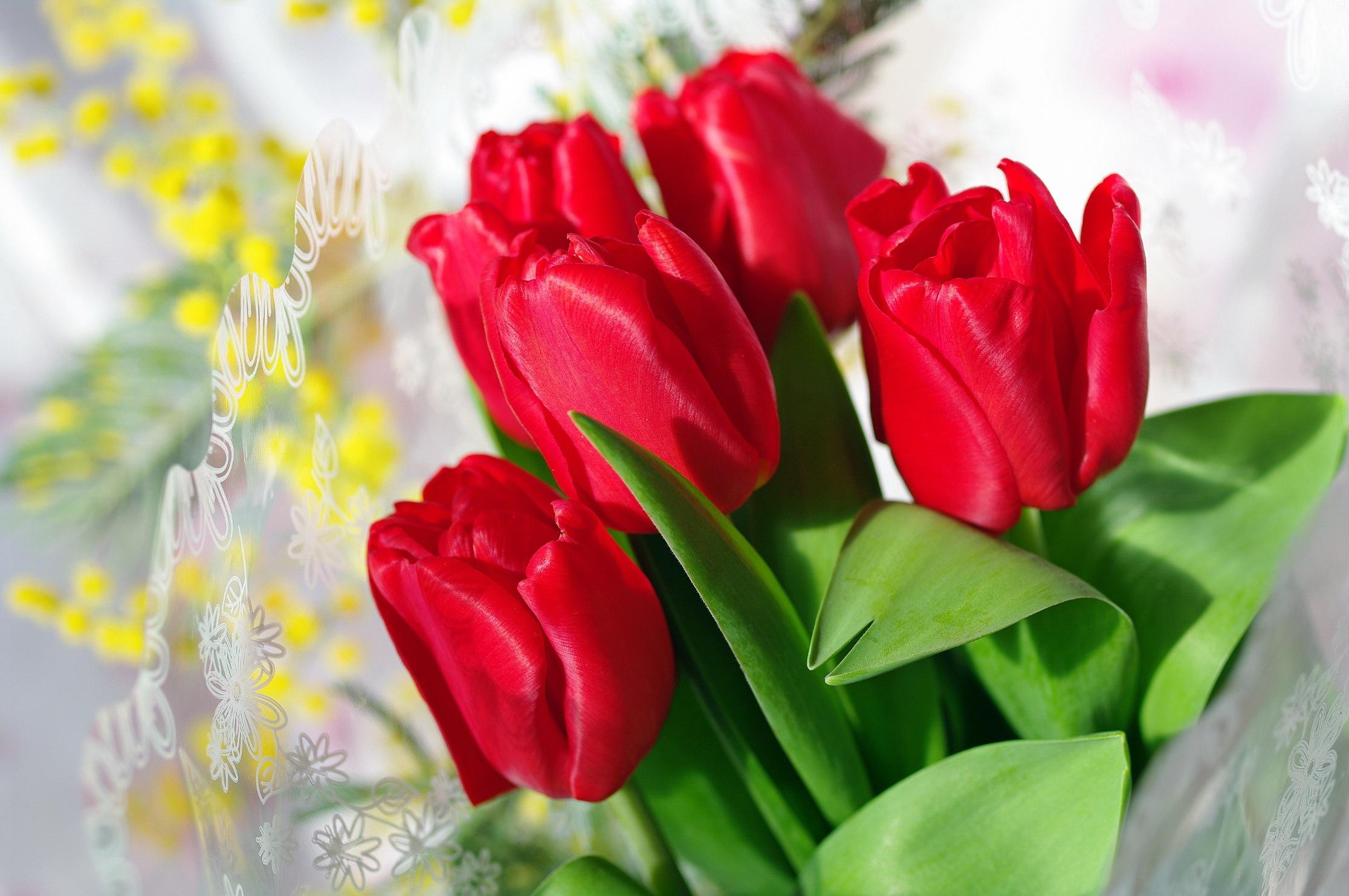 Открытки с красными тюльпанами, открытки