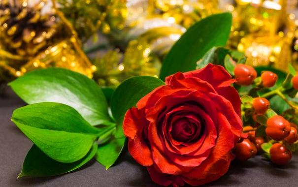 Фото обои листья, роза, лепестки, бутон