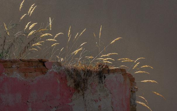Фото обои трава, фон, стена