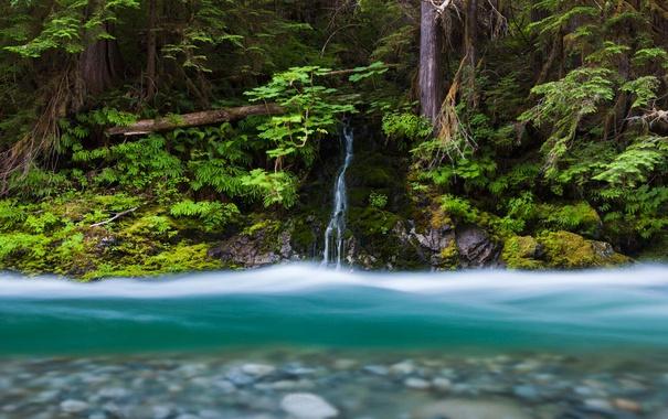 Фото обои лес, река, ручей, водопад, США, штат Вашингтон, Mount Baker-Snoqualmie National Forest