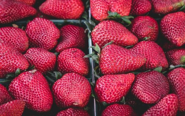 Фото обои клубника, ягода, виктория