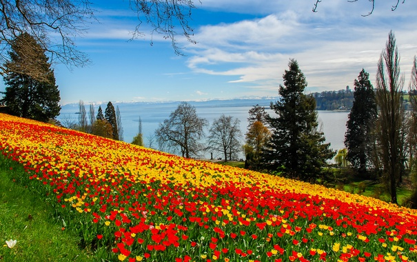 Фото обои небо, облака, деревья, цветы, река, берег, желтые