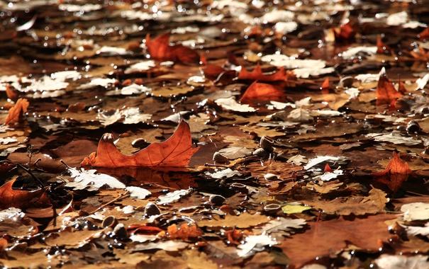 Фото обои листья, вода, природа