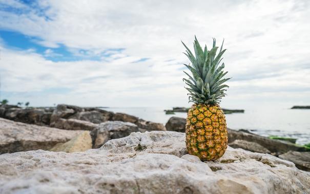 Фото обои камни, фрукт, ананас