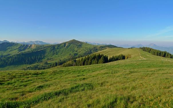 Фото обои зелень, небо, трава, деревья, горы, голубое, поля