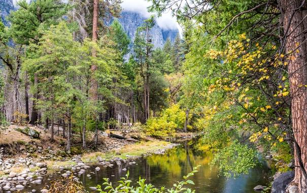 Фото обои осень, лес, деревья, камни, скалы, Калифорния, США
