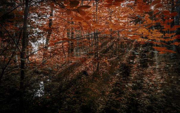 Фото обои лес, природа, цвет