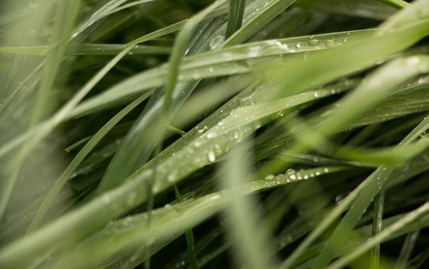 Фото обои трава, роса, зеленая