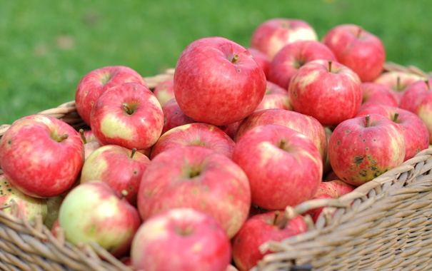 Фото обои макро, корзина, яблоки, урожай, фрукт