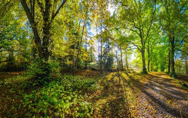 Фото обои осень, лес, трава, листья, деревья, парк, мох