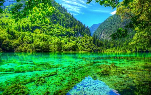 Фото обои лес, лето, небо, деревья, горы, озеро