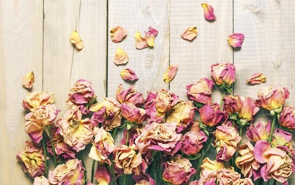 Фото обои розы, лепестки, wood, flowers, petals, roses