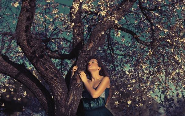 Фото обои девушка, лицо, дерево, платье