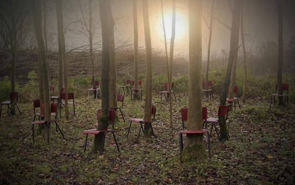 Фото обои свет, деревья, стулья