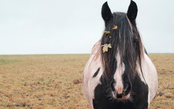 Фото обои природа, фон, конь