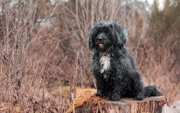 Фото обои взгляд, друг, пень, собака