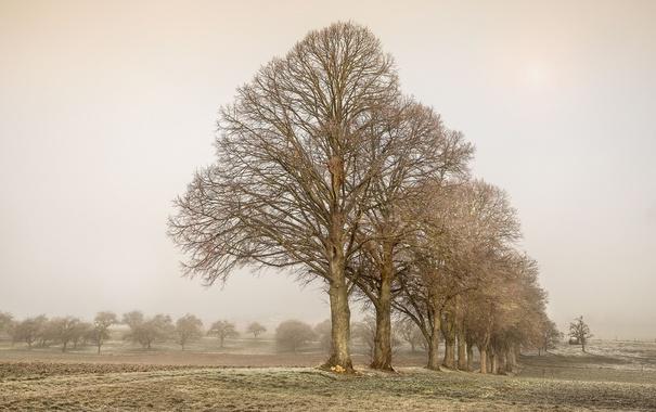Фото обои поле, деревья, природа