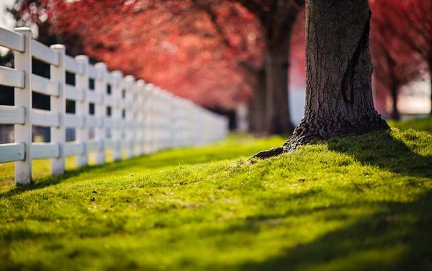 Фото обои трава, дерево, забор