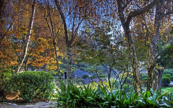 Фото обои осень, деревья, пруд, парк, камни, HDR, Калифорния