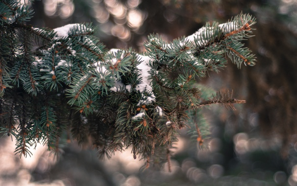 Фото обои зима, снег, иголки, ветки, елка