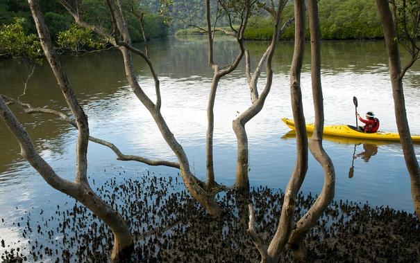 Фото обои вода, деревья, Австралия, каноэ, Новый Южный Уэльс, Marramarra Creek