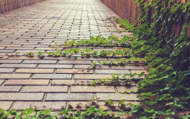 Фото обои листья, улица, растение, зеленые, плющ
