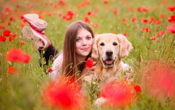 Фото обои лето, девушка, собака