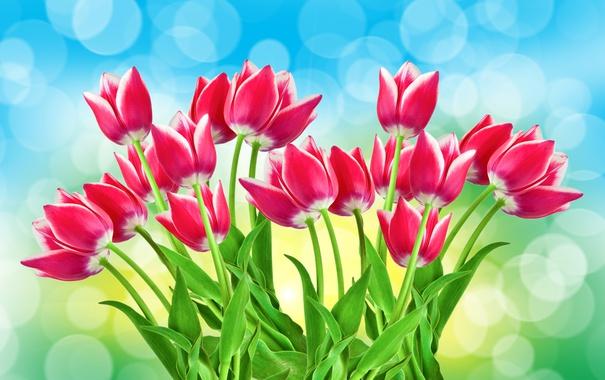 Фото обои блики, фон, тюльпаны, розовые