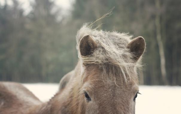 Фото обои глаза, конь, лошадь