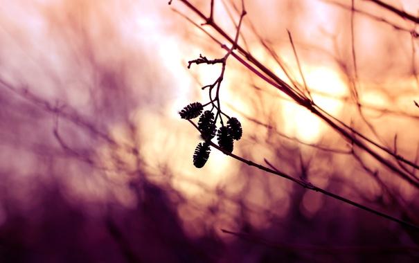 Фото обои природа, фон, ветки