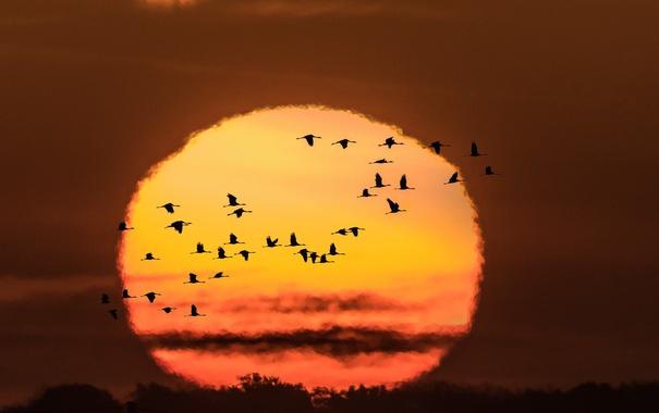 Фото обои солнце, птицы, краски, яркие, Закат