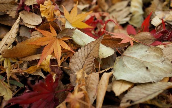 Фото обои осень, листья, сухие