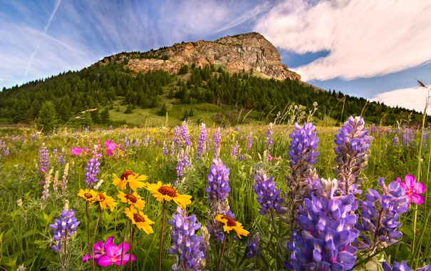 Фото обои цветы, гора, луг, Канада, Альберта, Alberta, Canada