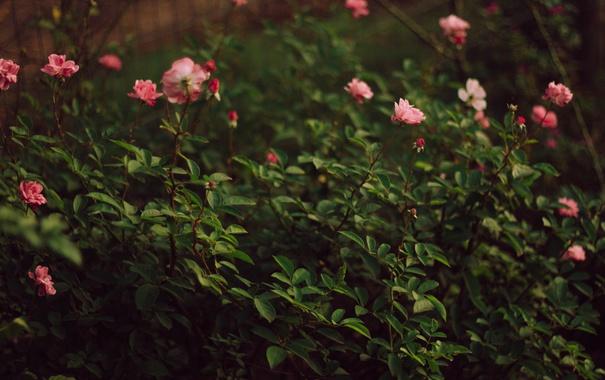 Фото обои цветы, лепестки, кусты