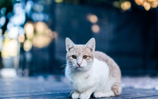 Фото обои кошка, кот, смотрит