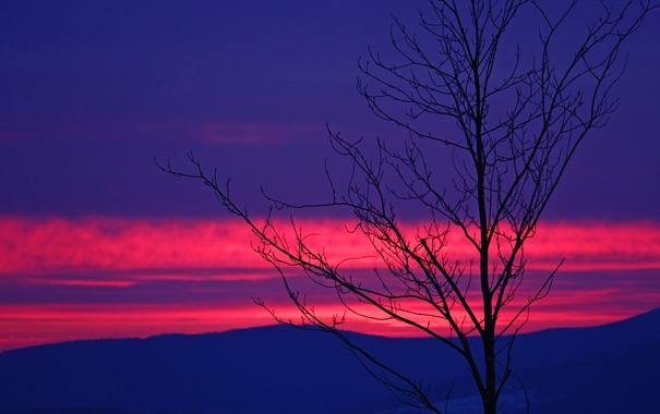 Фото обои облака, горы, дерево, силуэт, зарево