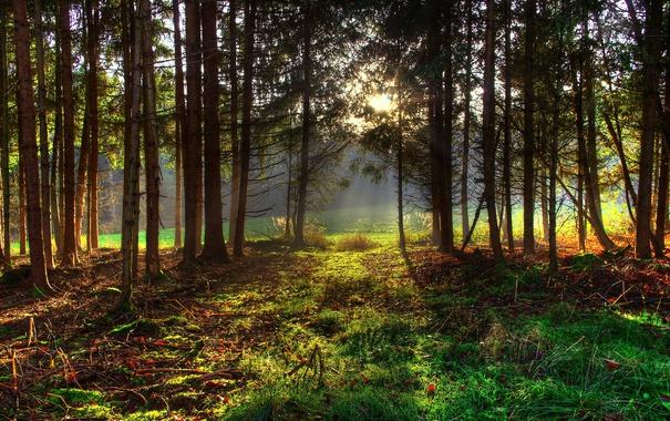 Фото обои лес, свет, деревья, природа