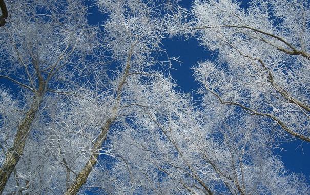Фото обои иней, небо, ветки, деревья, зима