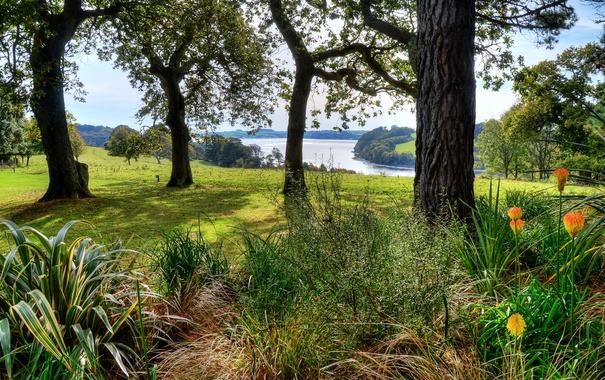 Фото обои трава, деревья, цветы, река, поля, Великобритания, луга