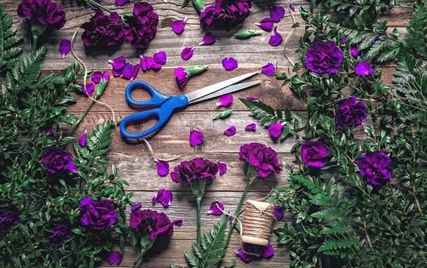 Фото обои листья, лепестки, нитки, папоротник, ножницы, гвоздики, барвинок