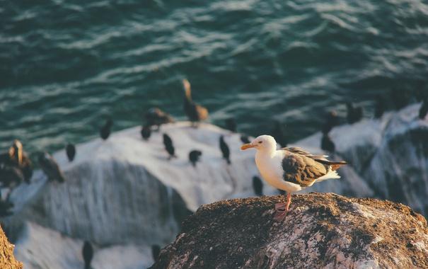 Фото обои птица, чайка, перья
