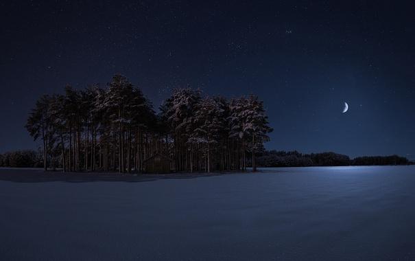Фото обои зима, деревья, ночь