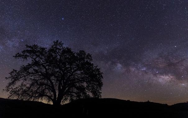 Фото обои звезды, ночь, природа, дерево, силуэт