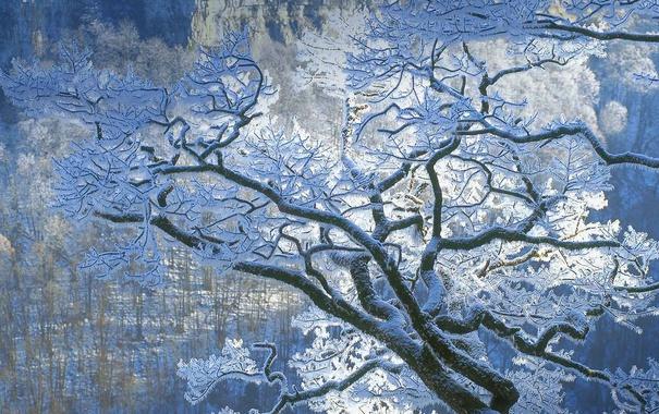 Фото обои ветки, Франция, лёд, дуб, Юра