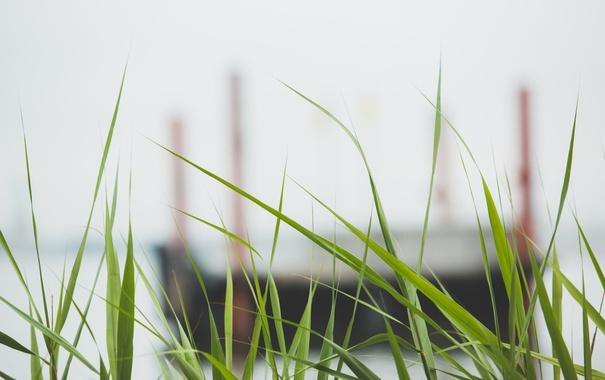 Фото обои трава, зеленая, много