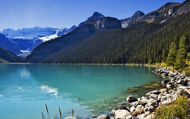 Фото обои лес, небо, солнце, деревья, горы, озеро, камни